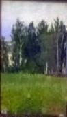 Вид на дубовый гай 1896.